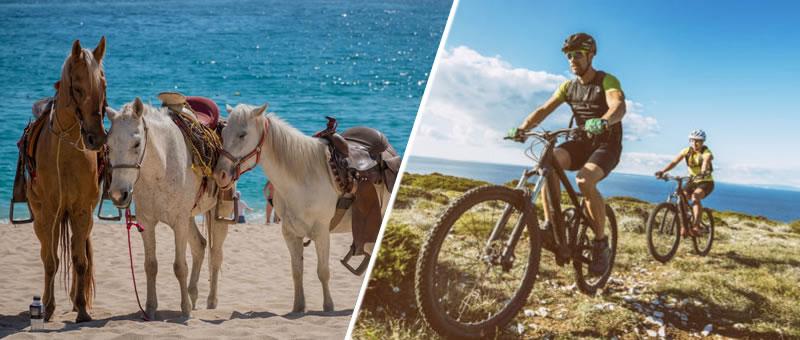 photo of horse and mountain bike